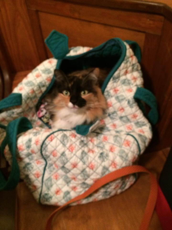 janie 40 sprite in the bag